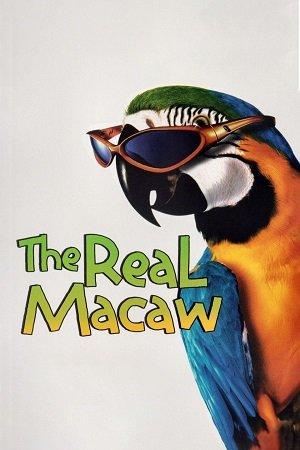 The Real Macaw (1998) จิ๊จ๊ะมาคอร์ ล่าสมบัติโจรสลัด
